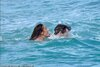 22681136-7828107-Pippa_and_James_took_the_plunge_swimming_out_into_the_ocean_earl-a-71_1577388...jpg