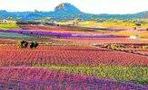 floracion-kkf-U100235412498Q9-624x385@La Verdad.jpg