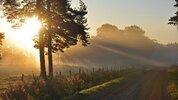 light-morning-road.jpeg