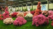 floralien+Gent_viersterren+wordpress.jpg