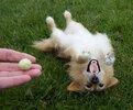 Needle-Felted-Poodle__880.jpg