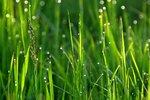 grass-1369144_960_720.jpg